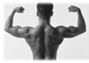 Exercices du haut du dos