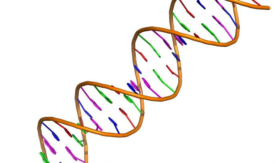 Une nouvelle version du stockage de données ADN permet aux utilisateurs de prévisualiser les fichiers stockés