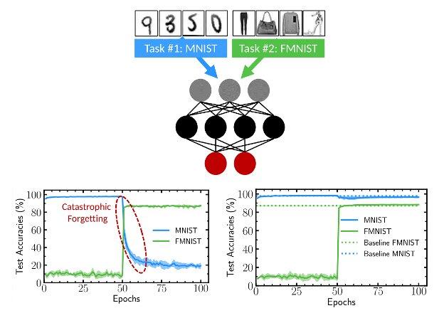 Une technique bio-inspirée pour atténuer l'oubli catastrophique dans les réseaux de neurones binarisés