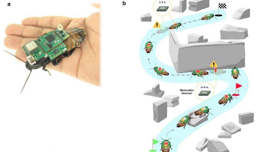 Un système hybride insecte-ordinateur pour les opérations de recherche en cas de catastrophe