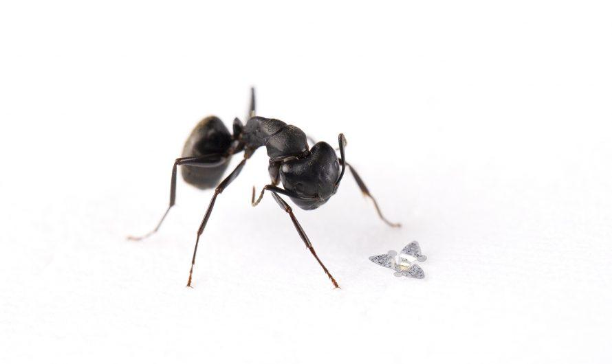 La micropuce ailée est la plus petite structure volante jamais créée par l'homme